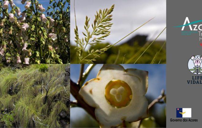 Plantação de Espécies Endémicas dos Açores