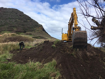 Azorean Government starts mechanical control of invasive species in Monte da Guia, Faial Island (in Portuguese)