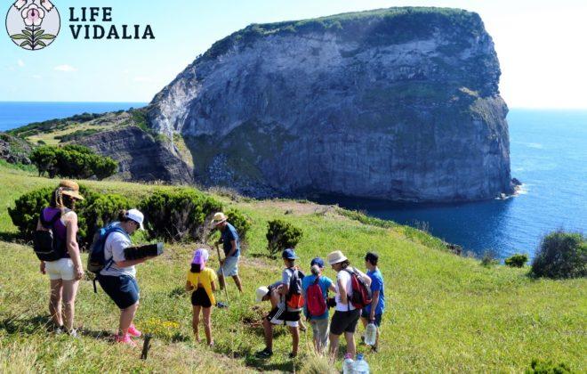 LIFE VIDALIA | PN FAIAL – Limpeza no Morro de Castelo Branco