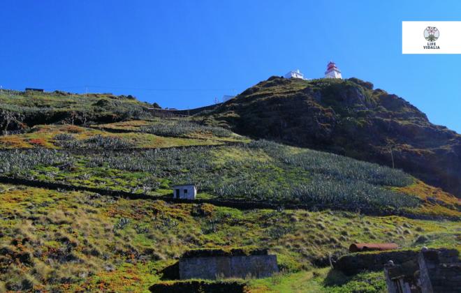 PN Santa Maria – LIFE VIDALIA –  Caminhando por Vidálias e Rochas